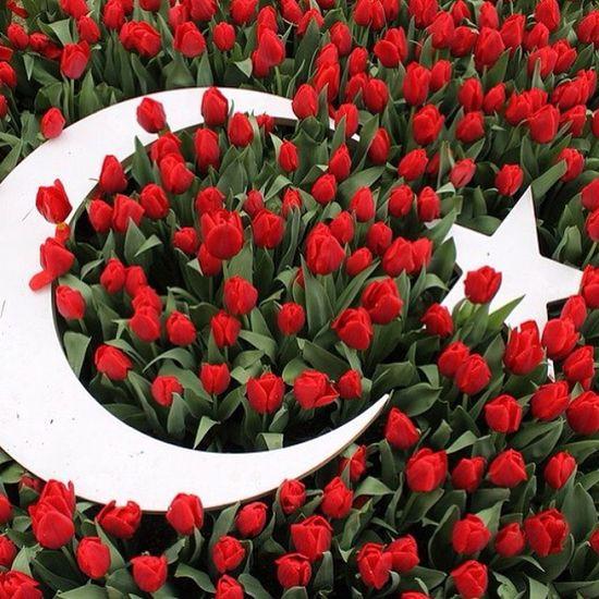 Istanbul Emirgan Park Koru tulip flower lale cicek bahar manzara nature color turkiye turkbayragi flag