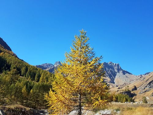 Mountain View Vibrant Colors Piedmont Italy Travel Destinations Pinaceae Pine Tree Mountain Tree Nature Scenics No People Blue Beauty In Nature Day Outdoors Tranquility Landscape Sky Clear Sky Mountain Range Vacations Forest