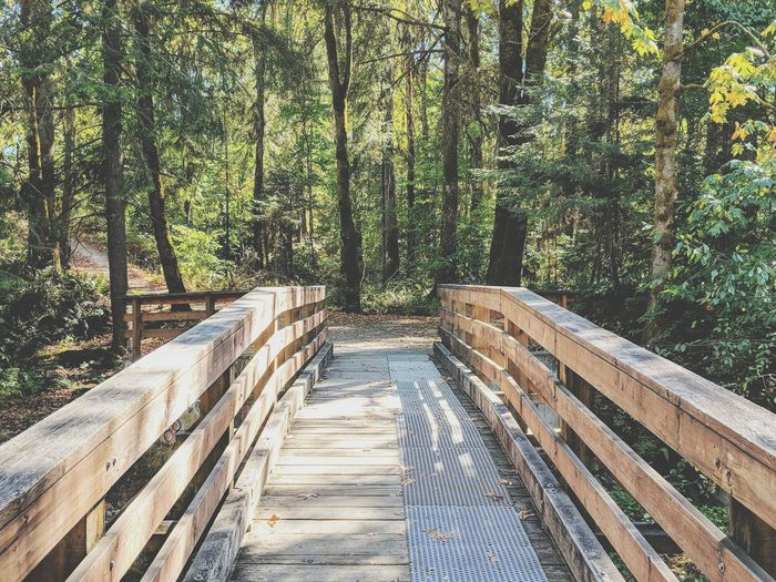 a walk in the woods, on a sunny day, with a cool footbridge EyeEmNewHere Woods Forest Hiking Adventure Path Pathway Lush - Description Lush Foliage Greenery WoodLand Woods Pathway Pine Woodland