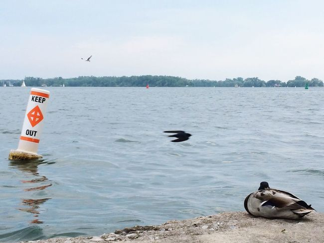 comfort zone👌🏻 Bird Waterfront Beauty In Nature Water Animal Wildlife Flying Nature Birdwatching