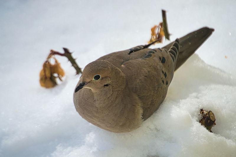 Close-up of animal representation on snow