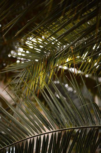 Close-up of bamboo at night