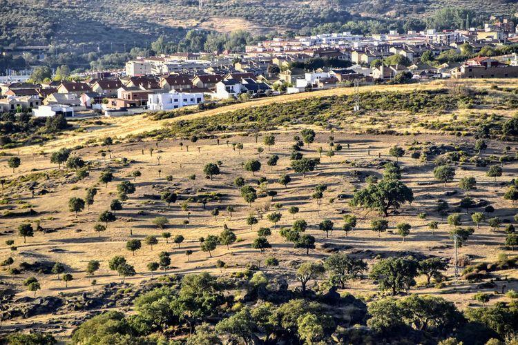 Tree Terraced