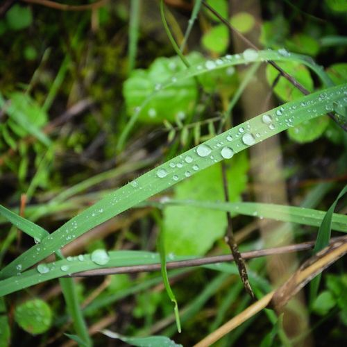 Drop Water Leaf Green Color Blade Of Grass Nature Plant Beauty In Nature Purity