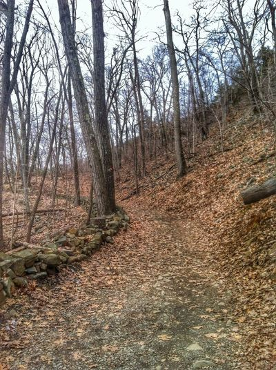 Chosen Paths Nature Enjoying The Sights EyeEm Nature Lover