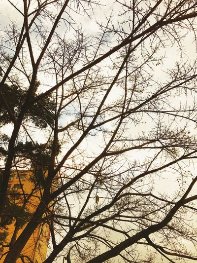Spring maybe coming soon Leaf No Leaf Yellow Yellow Tones Spring Is Coming  Spring Tree Beauty In Nature Nature Sky