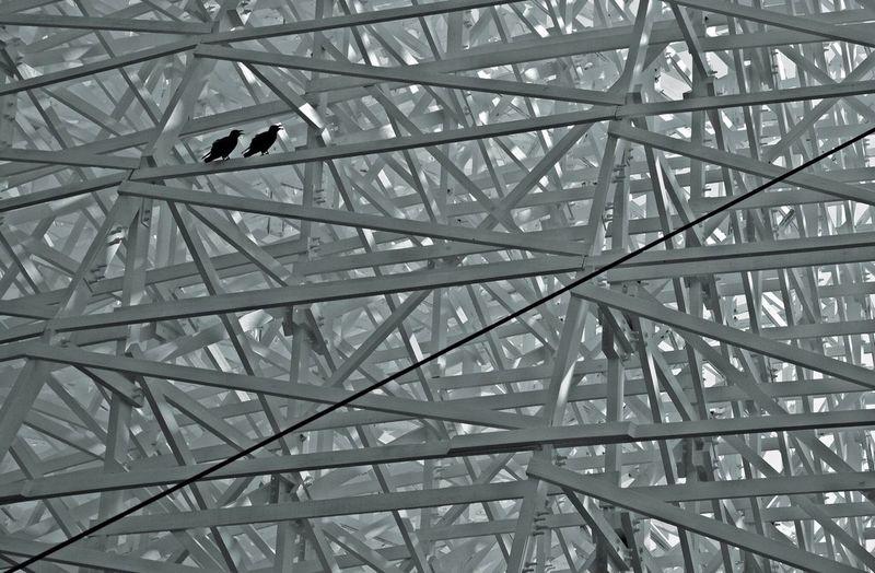 Crow Birds Blackandwhite EyeEm Best Shots - Black + White Blackandwhite Photography EyeEm Japan EyeEm Best Shots EyeEm Gallery EyeEm Best Edits EyeEmBestPics Eyeemphotography My Favorite Photo Pattern Streetphotography