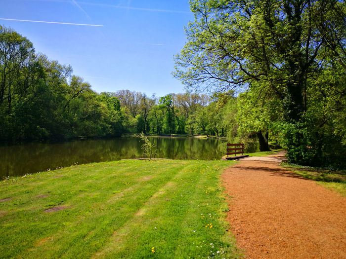 Plant Tree Tranquility Beauty In Nature Sky Nature Tranquil Scene Green Color Water No People Scenics - Nature Growth Day Grass Lake Sunlight Landscape Land Non-urban Scene Outdoors Park Martonvásár