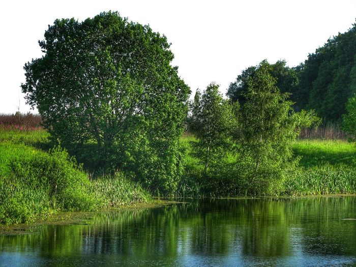 Tree Water Nature Tranquility Growth Outdoors Tranquil Scene Scenics Reflection Lake Green Color No People Beauty In Nature Day Sky