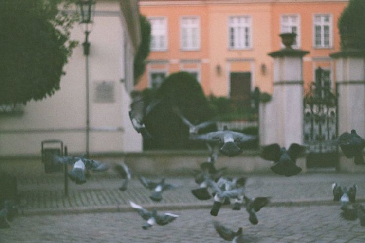 Animals Birds Blurred Motion City Dove Doves Fly Flying Flying Bird Motion No People Oldtown Oldtown Oldcity Outdoors Pigeons Pigeons In Flight Street Street Photography EyeEm Diversity