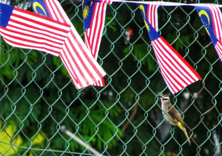 Happy Independence Day Malaysia 🎇🇲🇾🇲🇾🇲🇾🎇 Malaysia Flag Malaysia Patriotism Flag Striped Cultures Close-up National Icon Stars And Stripes National Flag Symbolism Identity Hanging
