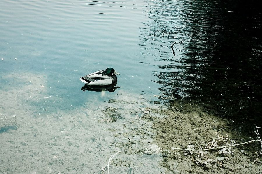 Just keep swimming...just keep swimming swimming swimming Fragility Blue Shadows Water Water_collection Duck Reflections The Great Outdoors - 2016 EyeEm Awards The Nature Photographer - 2016 Eyeem Awards Abstract Photography Cool Land And Sea Waves Dramatic Serenity Serene Outdoors Pivotal Ideas