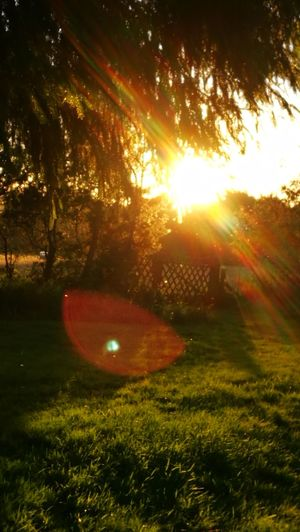 What a beautiful Sunlight... Sunbeam Sunlight Tranquility Nature Light Beam Tranquil Scene Beauty In Nature Landscape Summer Original Picture GetbetterwithAlex Wendland Green Color