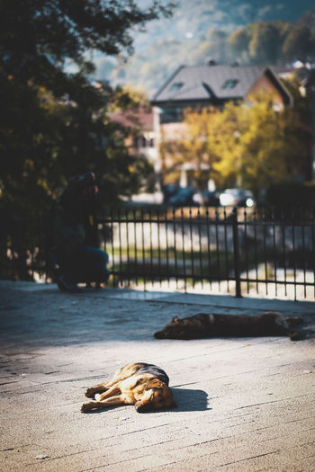 Dog relaxing in city
