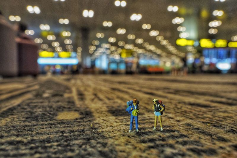 Travel Together Olympus 12-40 Olympus OM-D EM-1 Olympus Bokeh Changi Airport Airport Travel Photography Travel Land Sand Focus On Foreground Architecture Illuminated Built Structure No People Lighting Equipment Plant Vulnerability  Decoration In A Row Ceiling Surface Level Pattern Selective Focus Nature The Traveler - 2018 EyeEm Awards The Traveler - 2018 EyeEm Awards