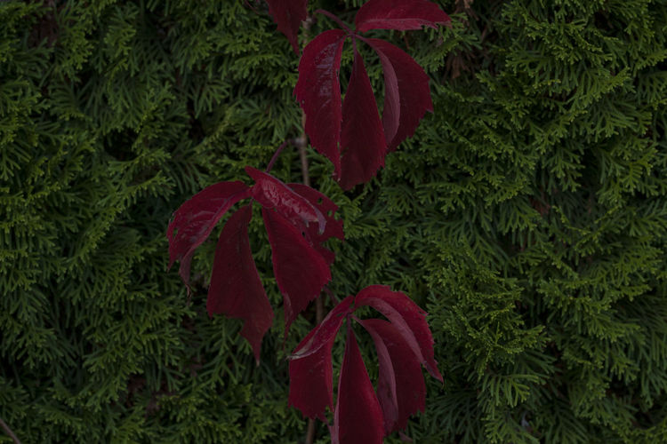 High angle view of red leaves on tree