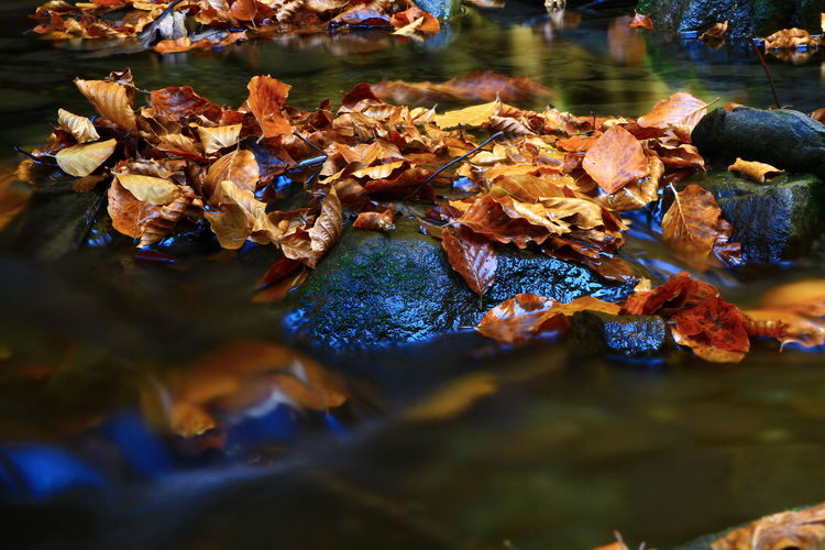 Water Leaf Plant Part Autumn Change Nature Day Leaves Reflection Selective Focus No People Outdoors Lake Close-up Waterfront Vertebrate Animal Animal Themes Floating On Water
