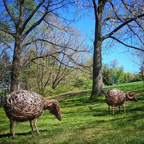 Bæ Sau Sheep Nhm_oslo Botaniskhage Bothanicalgarden Lifeincolors Lookatoslo Visitoslo Oslobilder