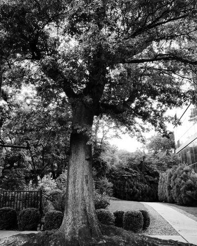 Tree Nature Fountain Growth Outdoors Motion Day Water No People Spraying Beauty In Nature Sky Freshness Black & White Shadows & Lights City NYC Photography Love My City!