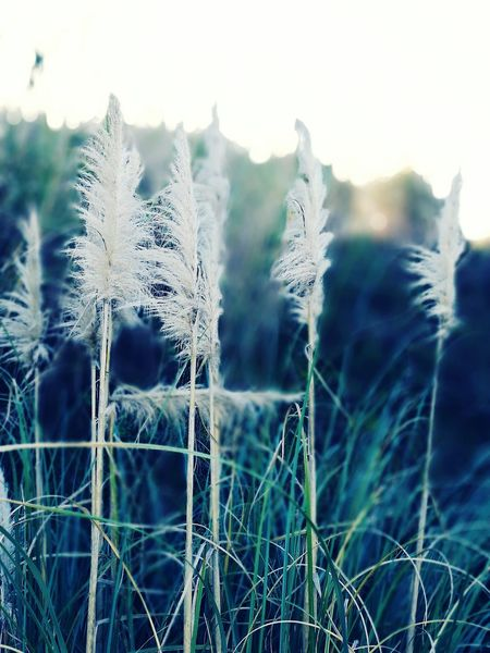 Nature Cold Temperature Winter Outdoors No People Plant Scenics Beauty In Nature Close-up Day Bukeh Aperture Flower Growth Plant Field Fragility Nature Huawei HuaweiP9 Huaweiphotography Huawei P9 Leica