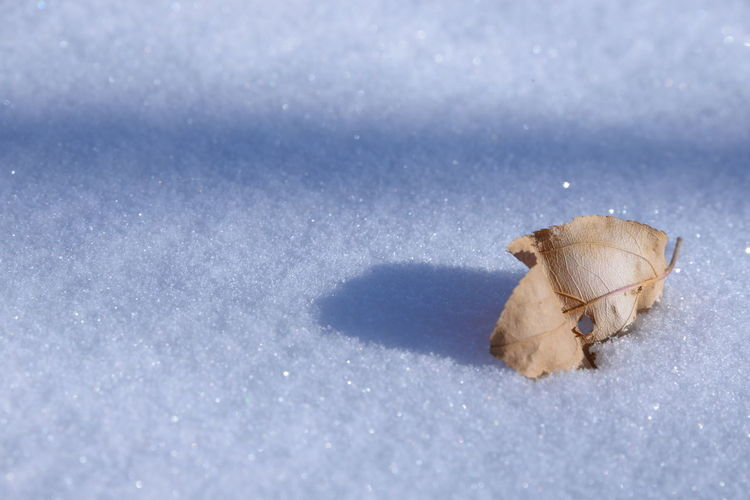 Close-up of leaf on snow covered field