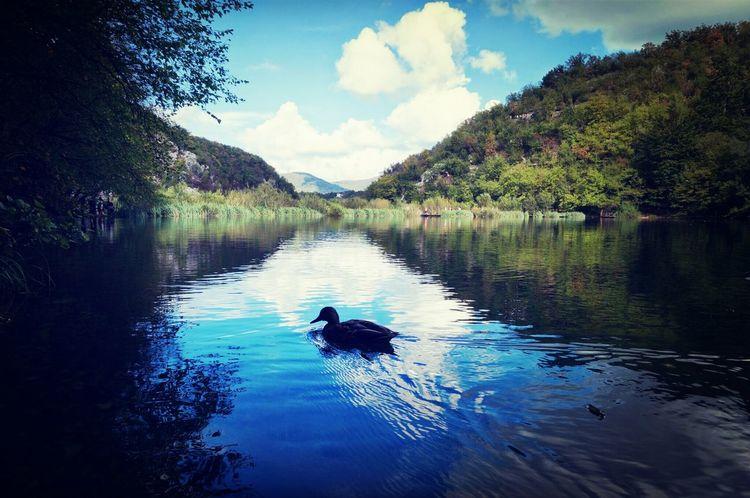 Plitvicelake Plitvice National Park Duck Reflection