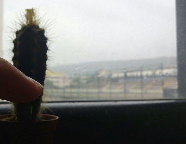 Rain, cactuse and thorn Rain Cactuse And Thron