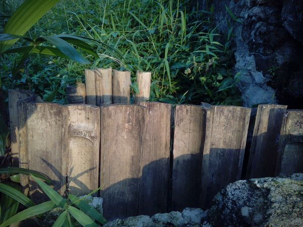 Plant Outdoors Day No People Growth Nature Bamboo Bamboo Fence Wood - Material Beauty In Nature