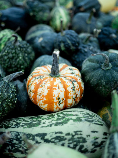 Close-up of pumpkins on ground during autumn