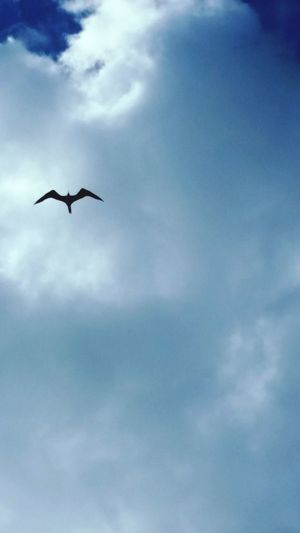Animals In The Wild Flying Bird Beauty In Nature Bird Alone Storms Clouds Behind Beauty In Nature Outdoors Scenes