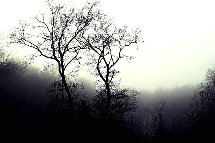 Eerie fog creeping through the lifeless wood. nNature sSky bBeauty In Nature tTranquility nNo People fFog oOutdoors cCloud - Sky sScenics tTranquil Scene lLandscape dDay dDesaturated EyeEm Nature Lover EyeEmNewHere