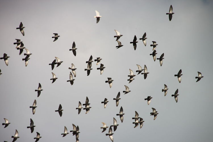 Low Angle View Of Birds Flying Against Sky