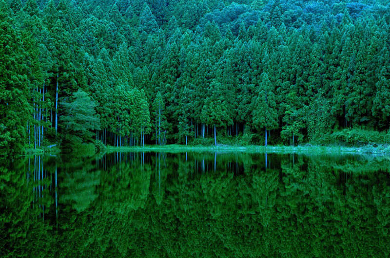 Beauty In Nature Calm Green Green Color Japan Landscape Landscape_photography Nara Nara,Japan Nature Nature Photography Pond Tree Trees Water Wood 奈良 龍王ケ渕 Reflection My Point Of View Water Reflections Tranquility Tranquil Scene From My Point Of View