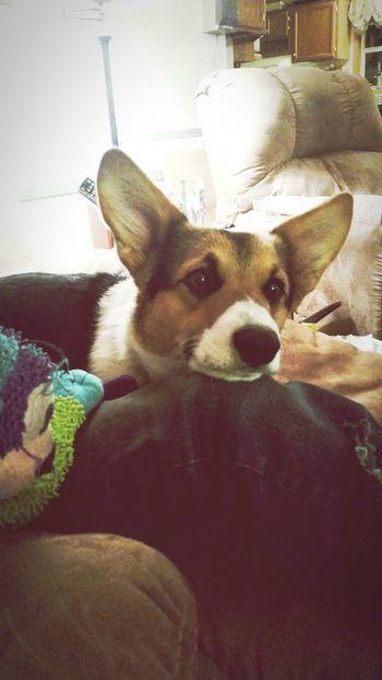 Mojo <3 Puppens <3 Lazy Saturday Sweet Pup Hello World