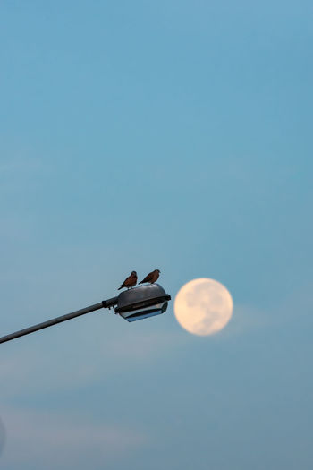 Low angle view of birds perching on street light against sky