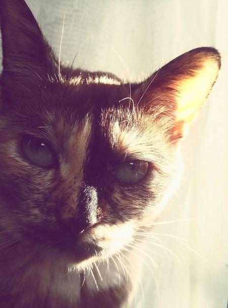 Taking Photos Cat♡ Frow JAPAN おはよう猫ちゃんず Capture The Moment ひなたぼっこ Good Morning Sunny Day sun Nyan-co