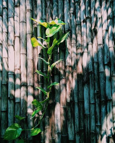 From this morning Bamboowall VSCO Vscocam Igersindia Chennai Igers Morning Plants Chamiers