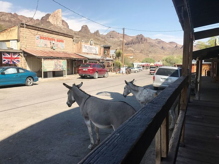 Domestic Animals Animal Themes Livestock Day Mammal Built Structure Cow One Animal Outdoors Road Mountain Architecture Building Exterior No People Sky Donkey Route 66