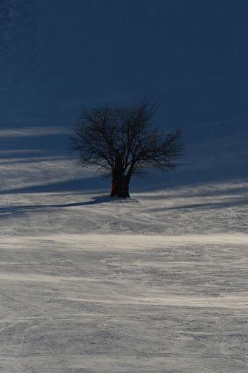 Tree Sky Snow