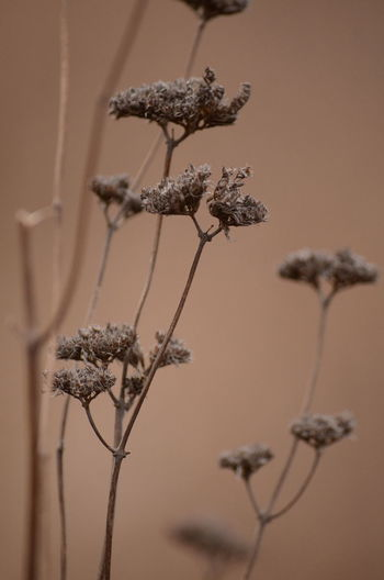 Flower Plant Close-up Flowering Plant No People Focus On Foreground Fragility Vulnerability  Plant Stem Nature Growth Beauty In Nature Dry Freshness Selective Focus Day Dried Plant Outdoors Tranquility Wilted Plant Dead Plant Flower Head Dried
