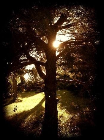 For The Love Of Trees ~ Spirit Of The Tree Sunset EyeEm Nature Lover