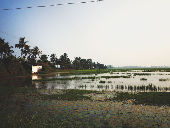 Alleppey Backwaters India Indian Street Photography Rice Paddy Alappuzha Alleppey Beauty In Nature Grass Kerala Kerala India Nature Outdoors Rice Paddy Fields View Scenics Street Photography India Street Scenes Of India Tranquil Scene