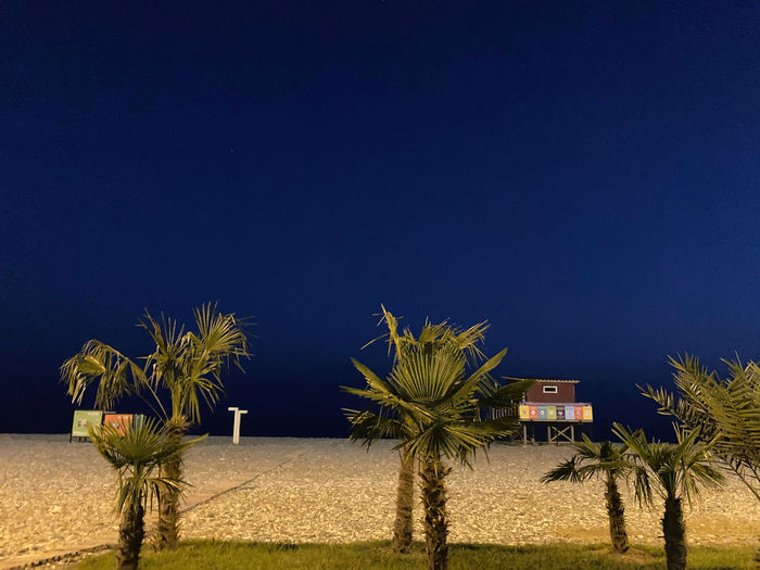 Palm trees on field against clear blue sky at night