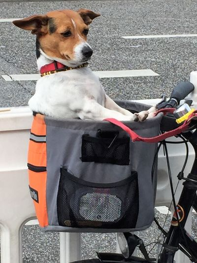 Dog Mobility Dogs Mobile Hundetransport Animal Themes Day Dog Dog In The Basket Dog Transportation Domestic Animals Human Hand Mammal One Animal One Person Outdoors People Pet Collar Pets Sitting Standing