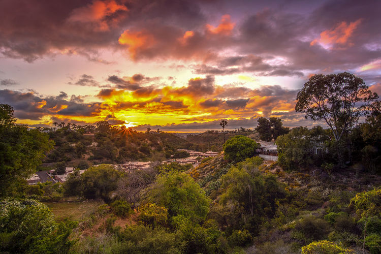 sunset over San Diego California Sunset Sky Cloud - Sky Beauty In Nature Plant Scenics - Nature Tree Tranquility Tranquil Scene Nature Environment Orange Color No People Landscape Non-urban Scene Idyllic Growth Land Outdoors Mountain