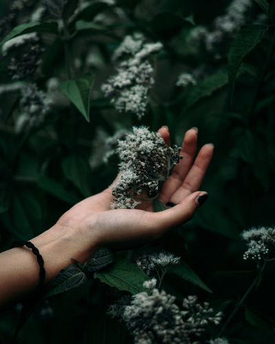 take a nature for relaxation Leafs Beauty In Nature Close-up Day Flower Flower Collection Flower Head Flowers Fragility Freshness Growth Holding Human Body Part Human Hand Leaf Nature One Person Outdoors People Plant Real People