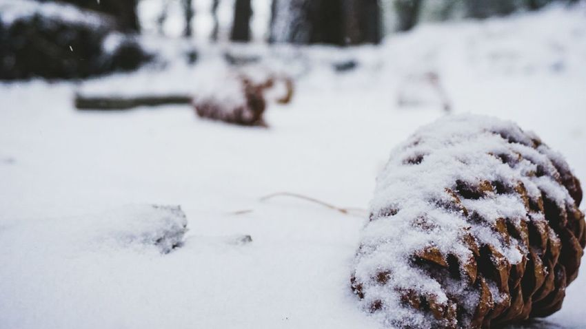 Winter Cold Temperature Snow Frozen Outdoors No People Nature Day Beauty In Nature Close-up Fine Art Photography Nature SonyAlpha6000 Followme Random Acts Of Photography Pinecones🌲🌲 Big Bear Ca Eyemphotography Photography Randomshot Beauty In Nature New Photographer Perspective