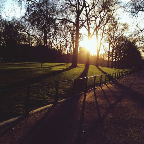 Sunset hide park