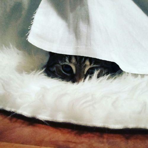 Titathecat Beauty Love Cats Comfort Eyes Look White Cat Tiger Pet Portraits