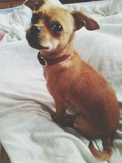 My litle dog:) 5074729
